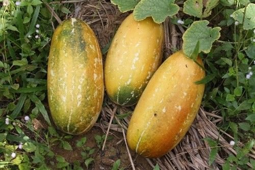 Cantaloupe For Skin Care - 9