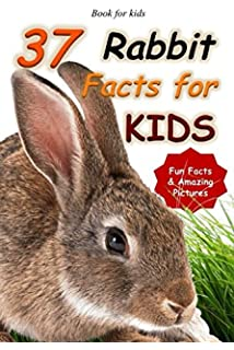 Bunnys Guide to Caring for Your Rabbit Pets Guides Anita