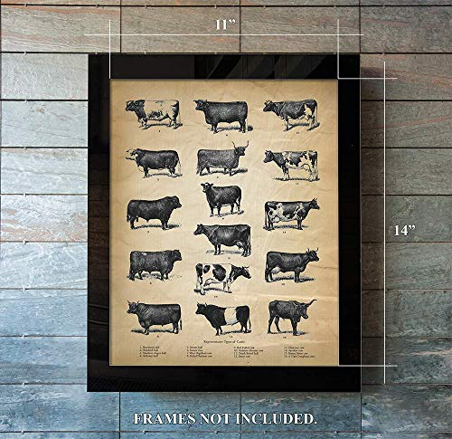 Vintage Farm Animal Print - Types of Cattle - Unique Wall Art of a Classic - Print Animal Farm