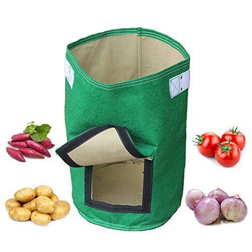 Grow Bag Tomatoes - 8