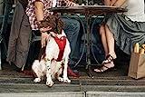 Kurgo Tru-Fit(TM) Crash Tested Dog Harness - Red - Large