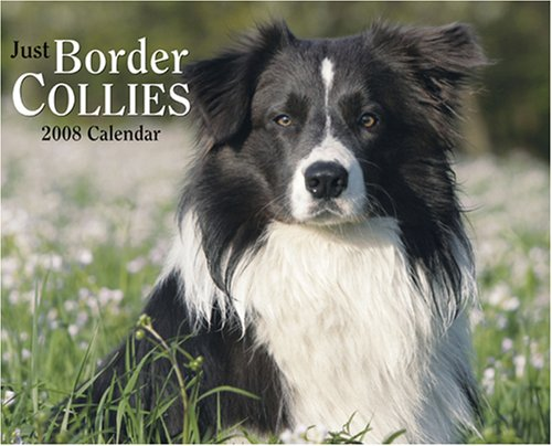 Just Border Collies 2008 Calendar (Just (Willow Creek))