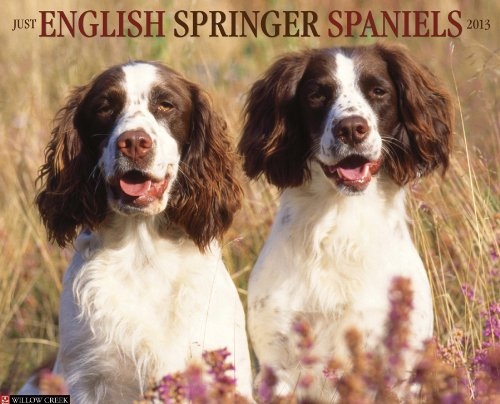 Spaniel 2013 Calendar - English Springer Spaniels 2013 Wall Calendar (Just (Willow Creek))