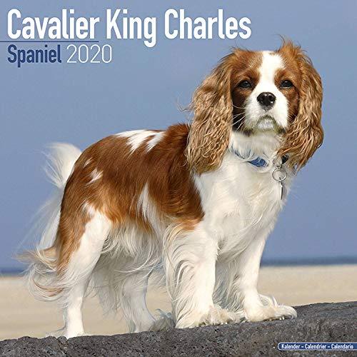 Cavalier King Charles Calendar 2020 - Dog Breed Calendar - Wall Calendar 2019-2020