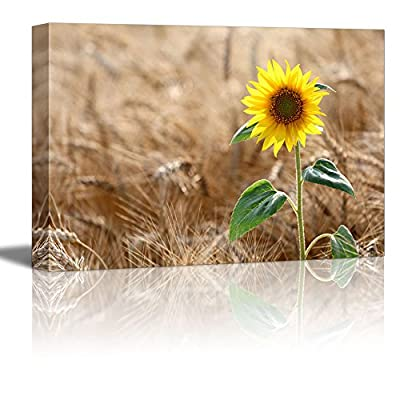 Sunflower on Wheat Field in Summer Sunny Day Wall Decor, Crafted to Perfection, Unbelievable Technique