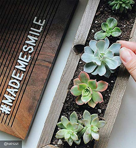1800Flowers Mini Trough Succulents in Reclaimed Wood Planter