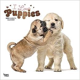 livre pdf gratuit télécharger I Love Puppies 2020 Calendar: Foil Stamped Cover