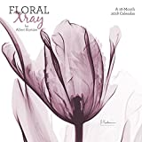 2018 Floral X-ray Wall Calendar (Mead)