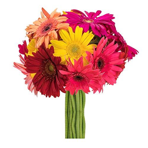 Assorted Gerbera Daisies - 20-Flower Bouquet, Grown in the USA