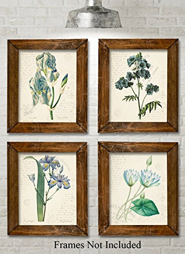 Blue Paris Botanicals - Set of Four Prints (8x10) Unframed - Great for Bedroom/Bathroom Decor Under $20 (Vintage Prints Flower)
