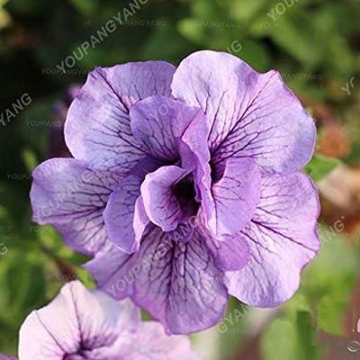 Amazon.com  200pcs/pack Bonsai Petunia Garden Bonsai Moon