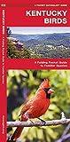 Kentucky Birds: A Folding Pocket Guide to Familiar Species (A Pocket Naturalist Guide)