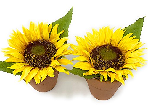 (Melrose Int Sunflower Decor Set of 2 Potted Flowers Artificial Faux Faked Ornamental Table Wedding Party Yellow Kitchen Decoration 5.5