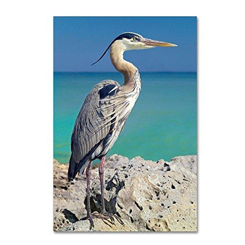 Jones Photo Art - Trademark Fine Art Blue Heron by Mike Jones Photo, 16x24-Inch Canvas Wall Art