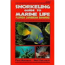 Snorkeling Guide to Marine Life: Florida Caribbean Bahamas