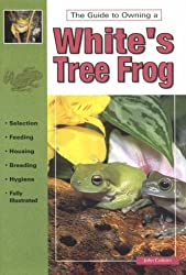The Guide to Owning White's Tree Frog
