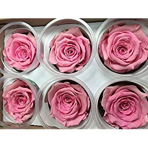 Freeze Dry Rose Head From Ecuador. Pack of 6 (light pink) 98