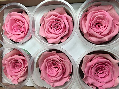 Freeze Dry Rose Head From Ecuador. Pack of 6 (light pink)