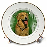 3dRose cp_4022_1 Golden Retriever Porcelain