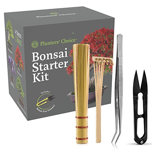 Planters Choice Bonsai Starter Kit   Tool Kit   The Complete Kit To Easily Grow 4 Bonsai Trees From Seed With Comprehensive Guide   Bamboo Plant Markers   Unique Gift Idea