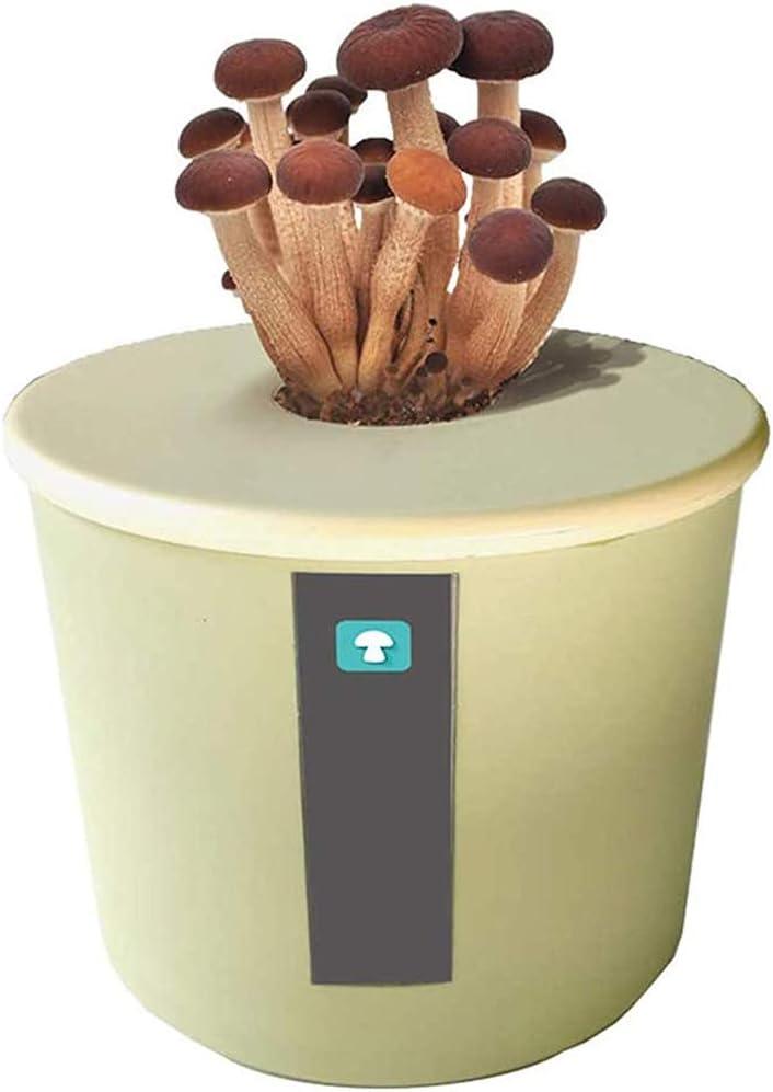 MZBZYU Garden Outdoors Setas Autocultivo Comestibles Kit, Se Puede Ver O Comer, Ahorra Espacio,Cultivo Setas En Casa Interior