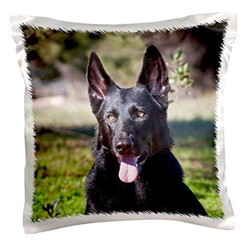 (3dRose Portrait of a German Shepherd dog - NA02 ZMU0133 - Zandria Muench Beraldo - Pillow Case, 16 by 16-inch (pc_140413_1))