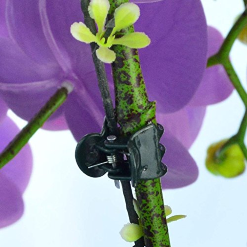 baotongle 200 pcs Plant Clips, Orchid Clips Plant Orchid Support Clips Flower and Vine Clips for Supporting Stems Vines Grow Upright Dark Green by baotongle (Image #3)