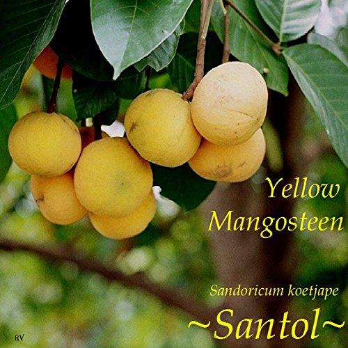 Santol Yellow Mangosteen Sandoricum Koetjape Rare Fruit
