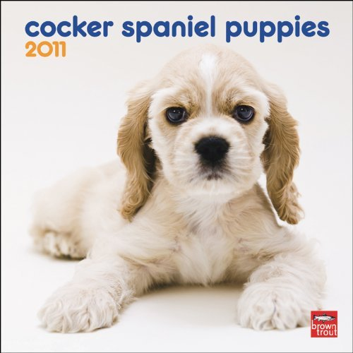 (Cocker Spaniel Puppies 2011 7X7 Mini Wall by BrownTrout Publishers Inc (2010-08-01) )