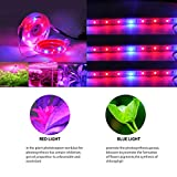 BRTLX LED Plant Light Strip Kit with Power Adapter 3 X 1.64ft Waterproof Red Blue 3:1