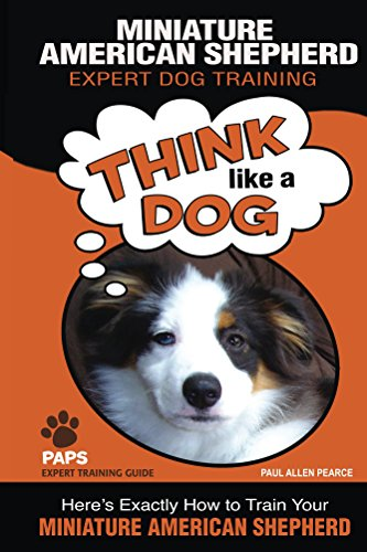 (MINIATURE AMERICAN SHEPHERD   Expert Dog Training: