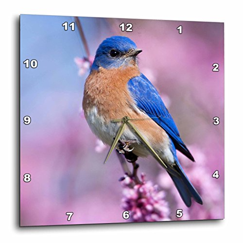 Bluebird Clock (3dRose Eastern Bluebird Male in Illinois, USA. - Wall Clock, 10 by 10-Inch (dpp_207630_1))