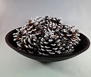 22 Snow Tipped Pine Cones Natural White Frosted Cones Decorative Home Decor Bowl Displays Crafting Hand Packed By Wreaths For Door