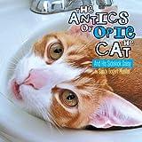 The Antics of Opie the Cat, Sandy Bogert Mueller, 1477157328