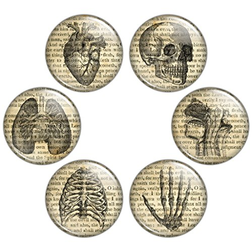 Button Bistro Men's Vintage Anatomy 1.25 inch (32 mm) Pinback Button Set Badges Pins