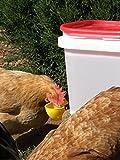 RentACoop 2 Gallon Yellow Cup Drinker