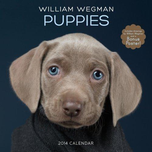 William Wegman Puppies 2014 Wall Calendar (Wall Calendars) by William Wegman (2013-08-16)