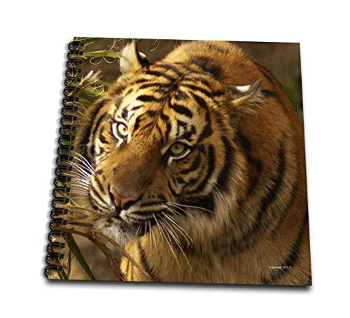 ジャッキー・Popp Nature N Wildlife animals–Bengal Tiger–Drawing Book 12 by 12-Inch db_21192_2