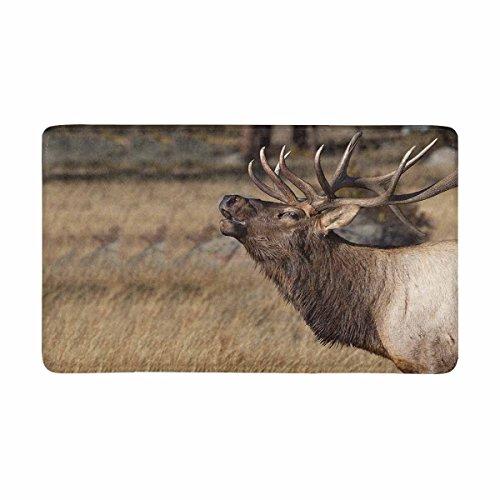 InterestPrint Deer Wilderness Elk in Rocky Mountain National Park Doormat Indoor Outdoor Entrance Rug Floor Mats Shoe Scraper Door Mat Non-Slip Home Decor, Rubber Backing Large 30