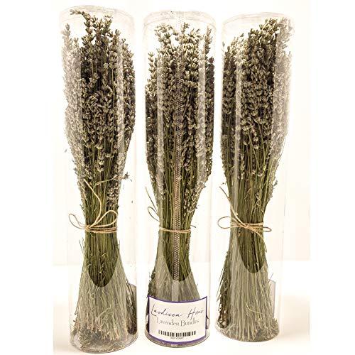 Natural Dried Lavender Bundles - Freshly Harvested Lavender Bunch Royal Velvet Decorative Flowers Bouquet Wedding Home Party Bundle Pack ()