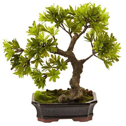 (Nearly Natural Indoor Decorative Podocarpus With Mossed Bonsai Planter)