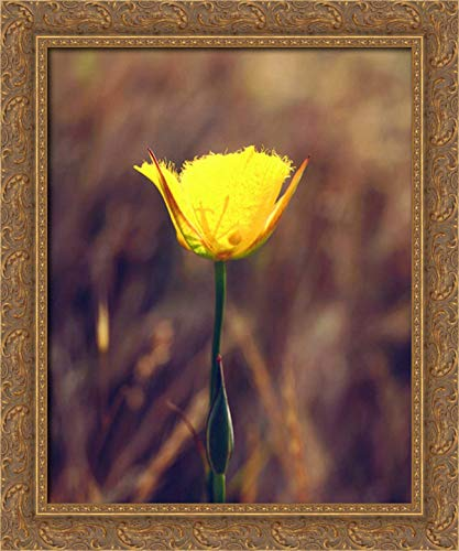 CA, San Diego, Mission Trails Mariposa Lily 20x24 Gold Ornate Wood Framed Canvas Art by Talbot Frank, Christopher