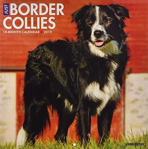 Just Border Collies 2019 Wall Calendar (Dog Breed Calendar) ()