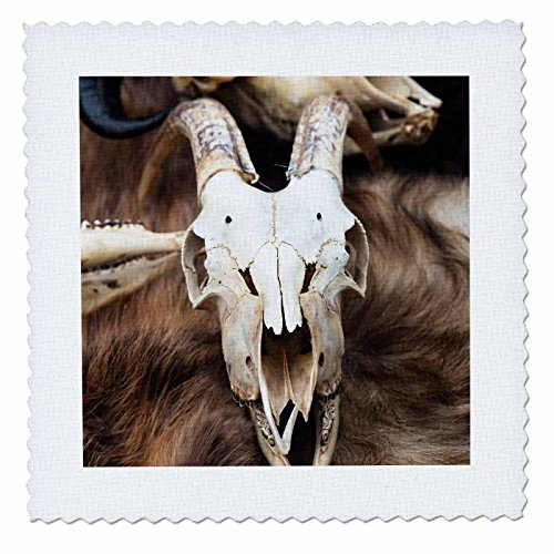 (3dRose Alexis Photography - Objects Animal Skull - Goat Skull on of White Color on a Brown Animal Hide. Frontal View - 6x6 inch Quilt Square (qs_286563_2))