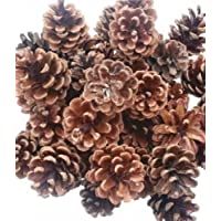 Piñas Naturales para Decoración Navideña - 500 gr
