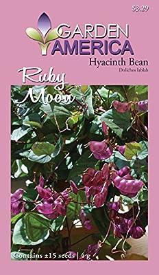 Garden America DOL-1552 Ruby Moon Hyacinth Bean Seed
