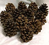 Wreaths For Door Natural 12-piece Ponderosa Pine Cone, Unscented
