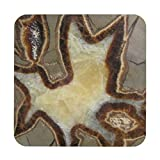 Petrified Mud Rock Drink Wood Coaster Set Of 4