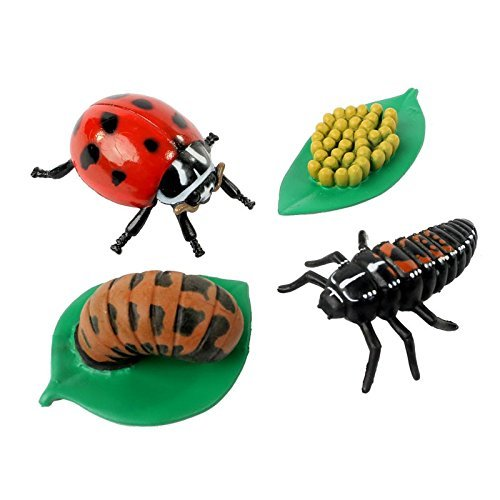 Insect Lore Life Cycle Stages Ladybug