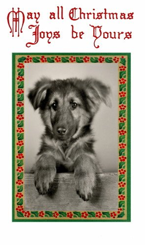 Antique Christmas Holly Border~Sweet Young German Shepherd Puppy Dog Vintage Photo~Holly~6 pack NEW Matte Vintage Picture Large Blank Note Cards with ()